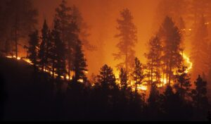 Insurance Wildfires